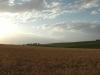 landscapes15